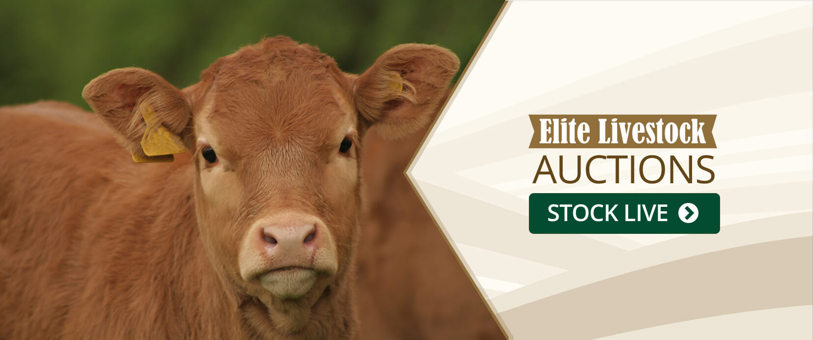 Elite Livestock Auctions Banner