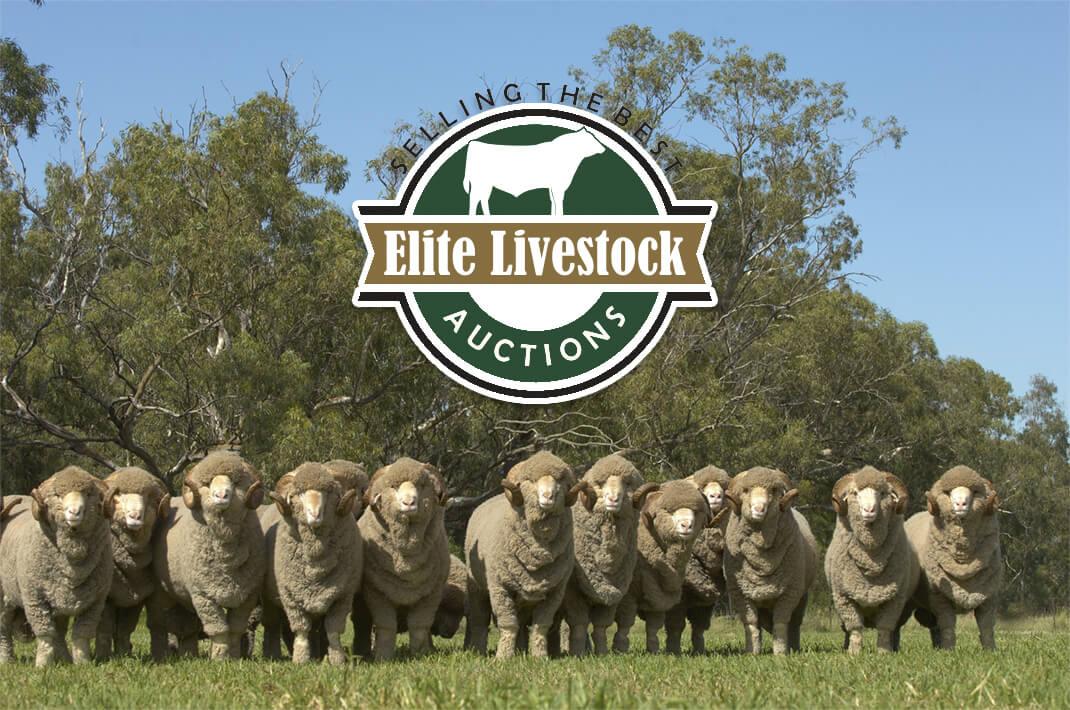 About Elite Livestock Auctions Photo