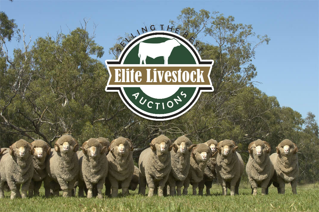 About Elite Livestock Auctions Photo