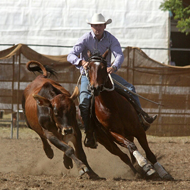 Horse Livestock Auctions Photo